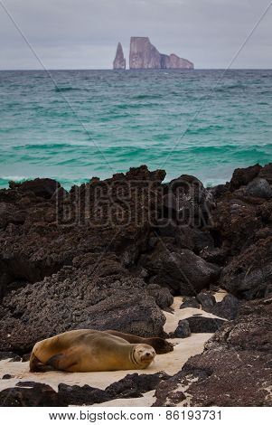 Closeup portrait of sea lions relaxing in a beach at the Galapagos Islands