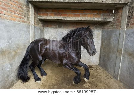 Powerful Stallion Horse