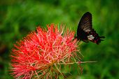 picture of flying-insect  - Butterfly flying over flower in the garden - JPG