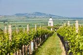 stock photo of chapels  - chapel with vineyard near Velke Bilovice - JPG