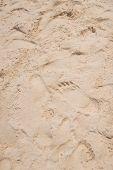 foto of footprints sand  - Many footprints on the sand - JPG