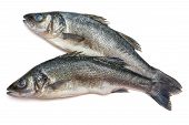 stock photo of bass fish  - Two Sea bass fish on withe background - JPG