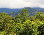 image of gunung  - Exotic rainforest landscape from gunung mulu national park borneo malaysia - JPG