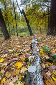 pic of decomposition  - Beautiful autumnal landscape of foggy forest with fallen leaves and old tree trunks - JPG