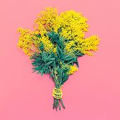 stock photo of mimosa  - Yellow Mimosa bouquet on pink background the symbol of International Women - JPG