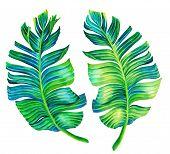 image of single  - banana palm leaves - JPG