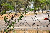 stock photo of babysitter  - The babysitter trees live together with barbed wire - JPG