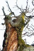 picture of fungus  - Close up of gigant ancient oak tree with green fungus on bright background - JPG