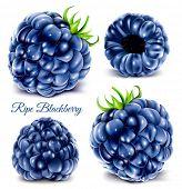 stock photo of blackberries  - Blackberries - JPG