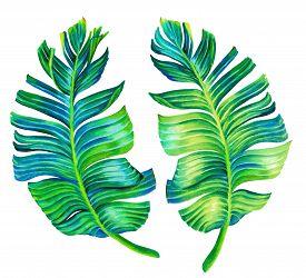 stock photo of motif  - banana palm leaves - JPG