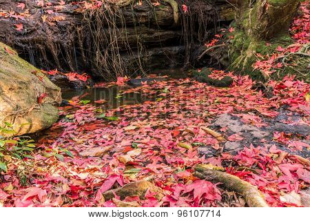 Red Maple Leaf On  The Ground