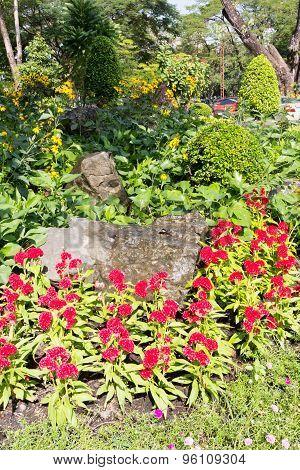 Plant & Flower Border