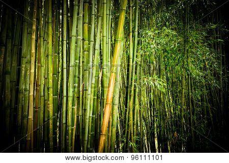 Bamboo Forest. Closeup