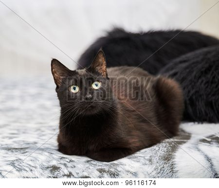 Black Cat Sitting On A Bed. Fragment