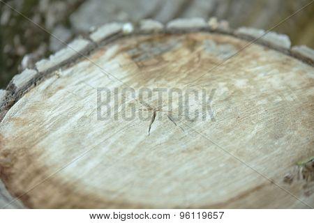 Beautiful tree bark. Close up.