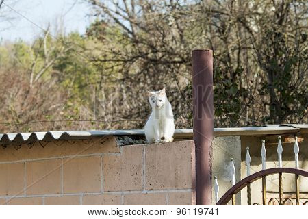 White cat sitting on a roof.