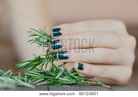 Rosemary in female hand with beautiful dark green manicure