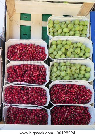 Fresh Ripe Gooseberries And Red Currents