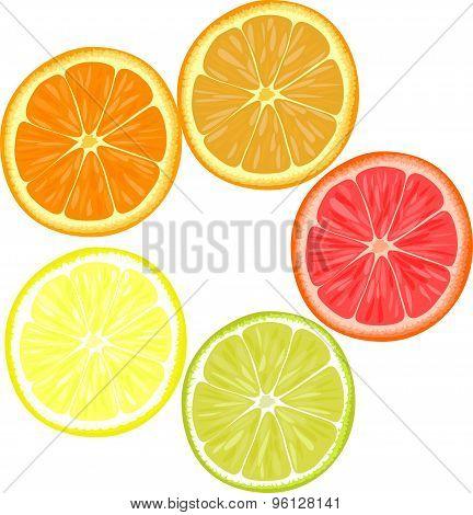 Slices of different citrus fruits. Orange, grapefruit, lemon, lime.