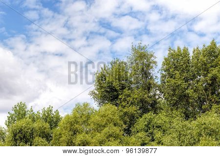Cloudy Sky Over The Trees