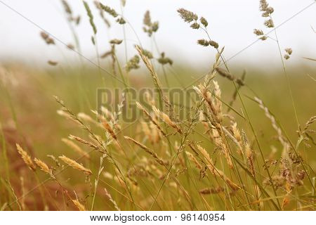 Close Up Of Grass Blowing In The Wind