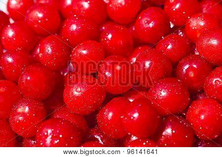 Fruits Downy Cherry