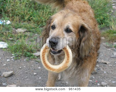 The Dog With The Bagel