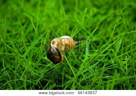 Small Snail And Grass Blade