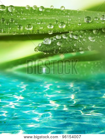 Green leaves with droplets on water background