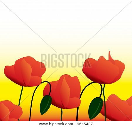 flowers of a poppy