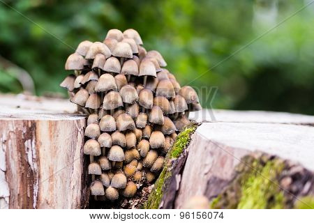 Small Mushrooms Of Different Colours On Tree Stump