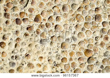 Sediment Rock With Fossilized Seashells On The Beach