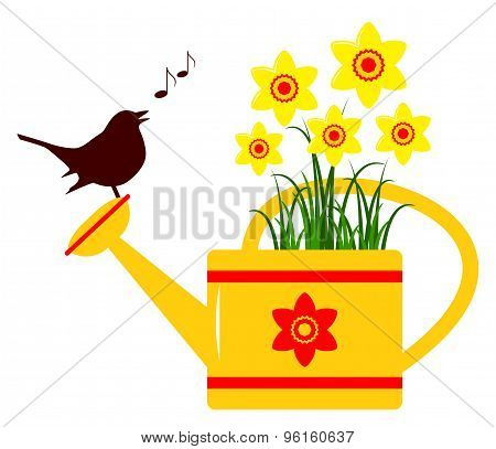 Daffodils In Watering Can