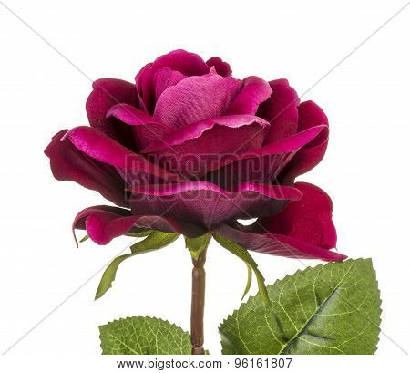 Artificial purple rose isolated.