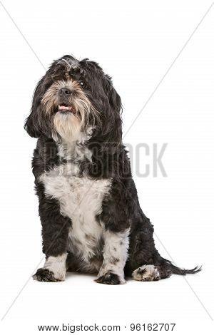 Mixed Breed Small Fluffy Dog
