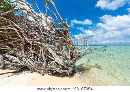 Old tree on the cost on the beautiful uninhabited island