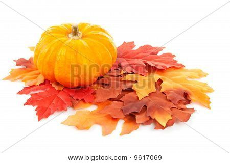 Pumpkin And Autumn Leaves