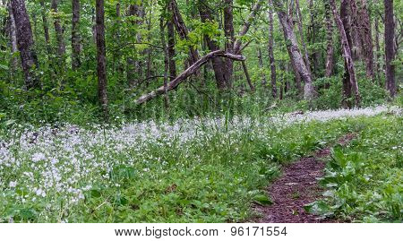 Small Wildflowers Along Appalachian Trail