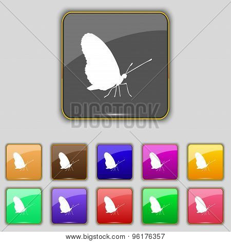 Butterfly Icon Sign. Set With Eleven Colored Buttons For Your Site. Vector