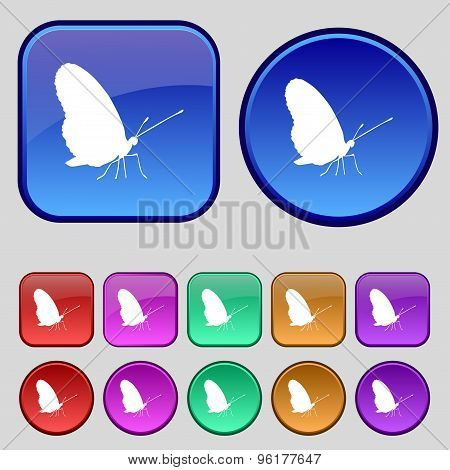 Butterfly Icon Sign. A Set Of Twelve Vintage Buttons For Your Design. Vector