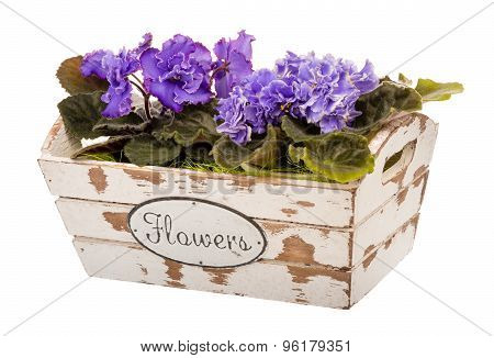Violet flowers in the decorative wooden box isolated.