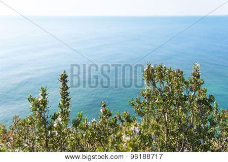 Rosemary and the Mediterranena sea