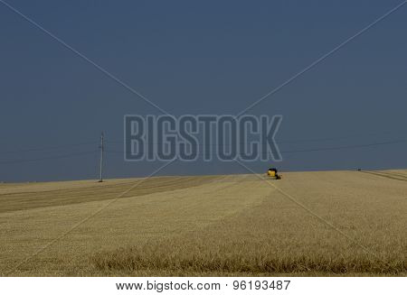 On The Horizon In The Field Wheat Harvesting