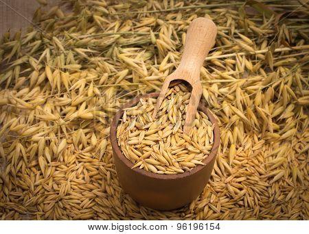 Oat Grain Closeup