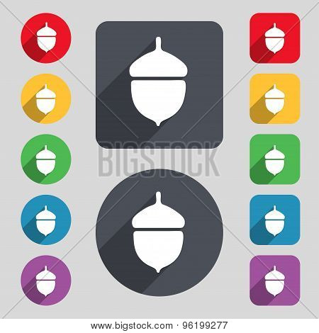 Acorn Icon Sign. A Set Of 12 Colored Buttons And A Long Shadow. Flat Design. Vector