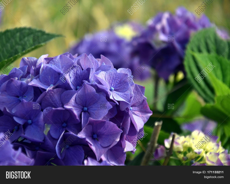 Blue plant names