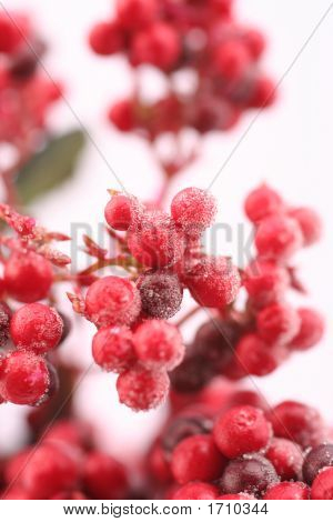 Red Frosted Berries Bursting With Flavour And Bright Color