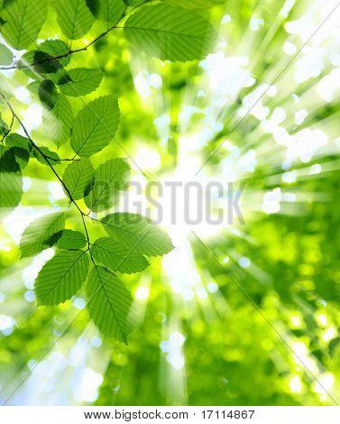 Hojas de color verde sobre fondo abstracto