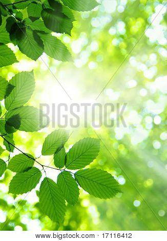 Sonne Strahlen und grüne Blätter