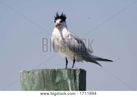 Pájaro loco